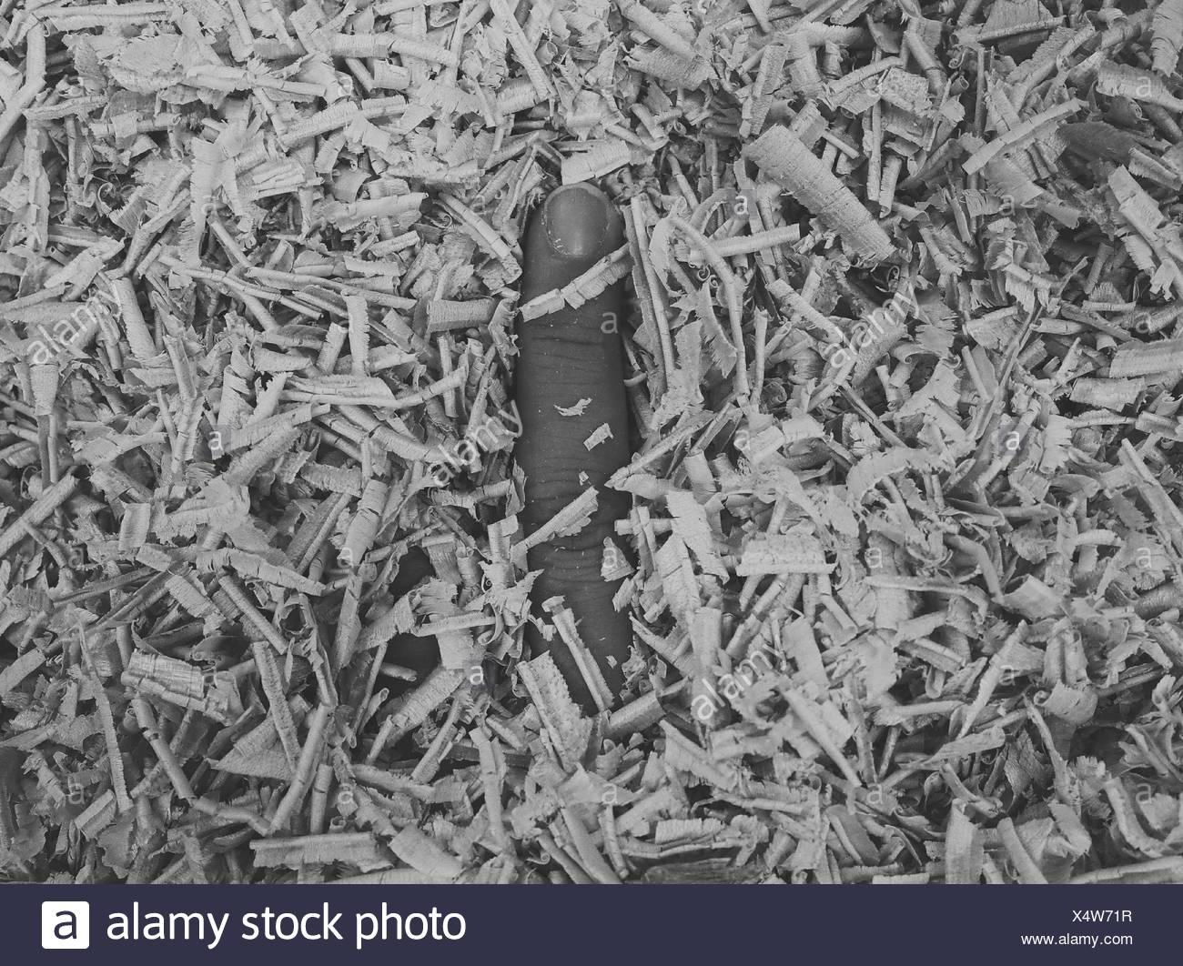 Person, die Finger im Sägemehl Stockfoto