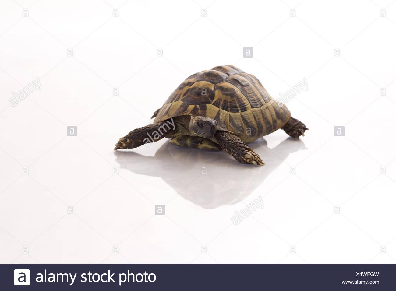 Fein Baby Meeresschildkröte Färbung Seite Galerie - Malvorlagen Von ...
