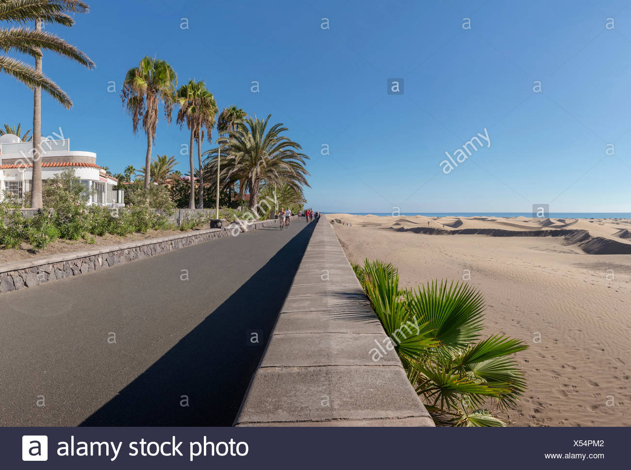 Spanien, Europa, Playa del Ingles, Gran Canaria, Kanarische Inseln, Paseo Costa Canario, Landschaft, Wald, Holz, Bäume, Sommer, beac Stockbild