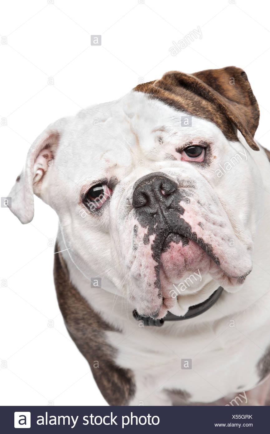 Charmant Baby Bulldog Färbung Seiten Bilder - Beispiel Anschreiben ...