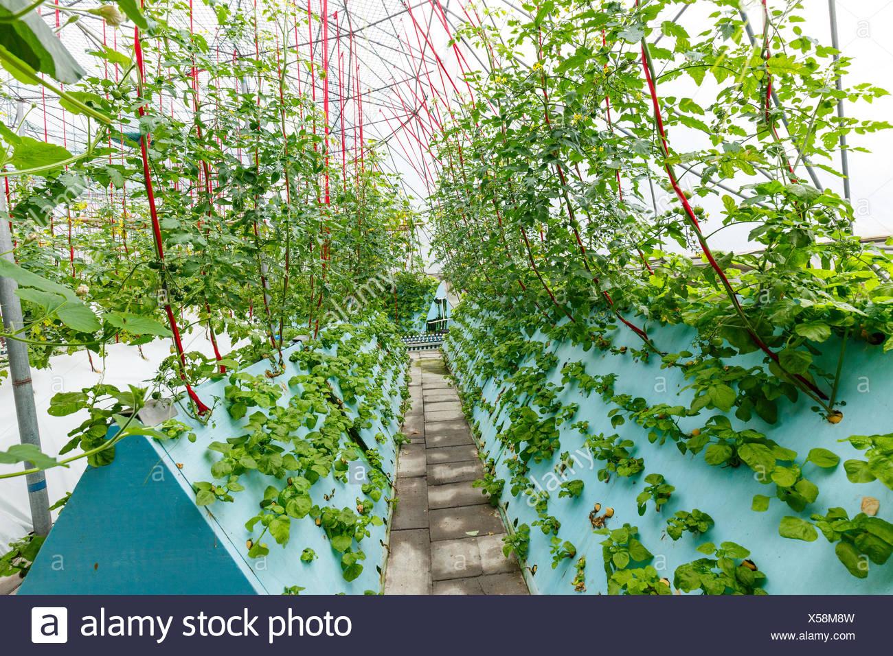 Innere Des Gemuse Gewachshaus Stockfoto Bild 278630713 Alamy
