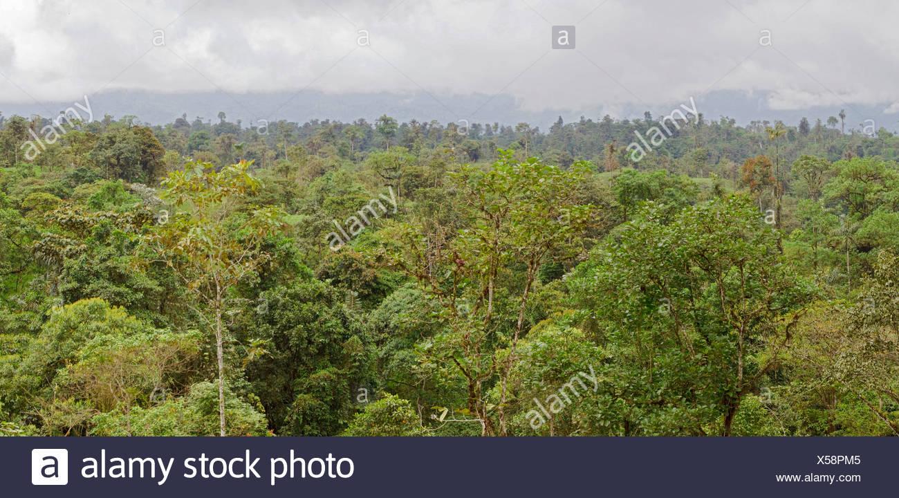 Amazonas-Regenwald Stockbild