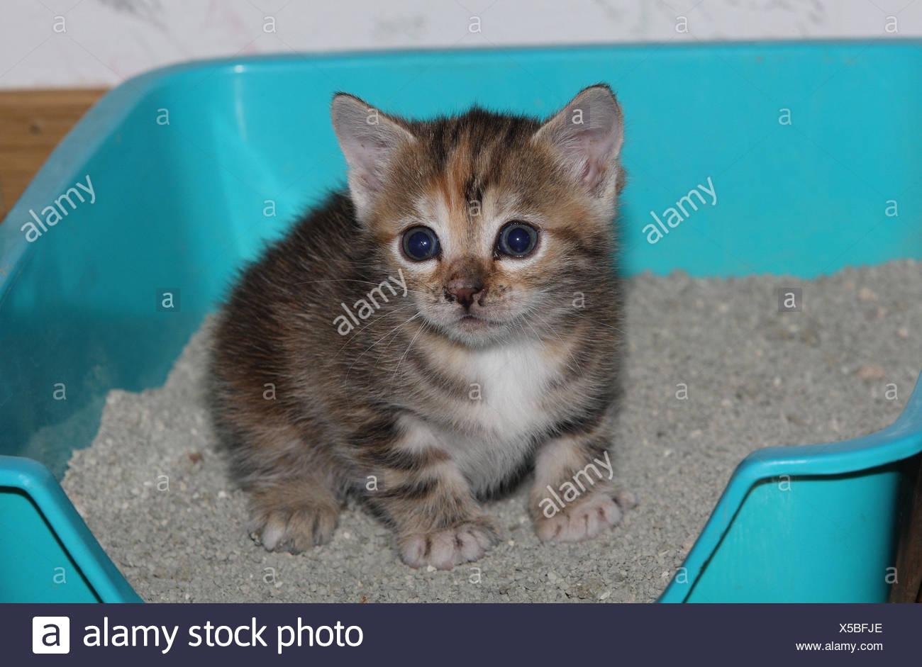 Ausmalbilder Von Süßen Katzen : Tolle S E Baby Katze Malvorlagen Galerie Entry Level Resume
