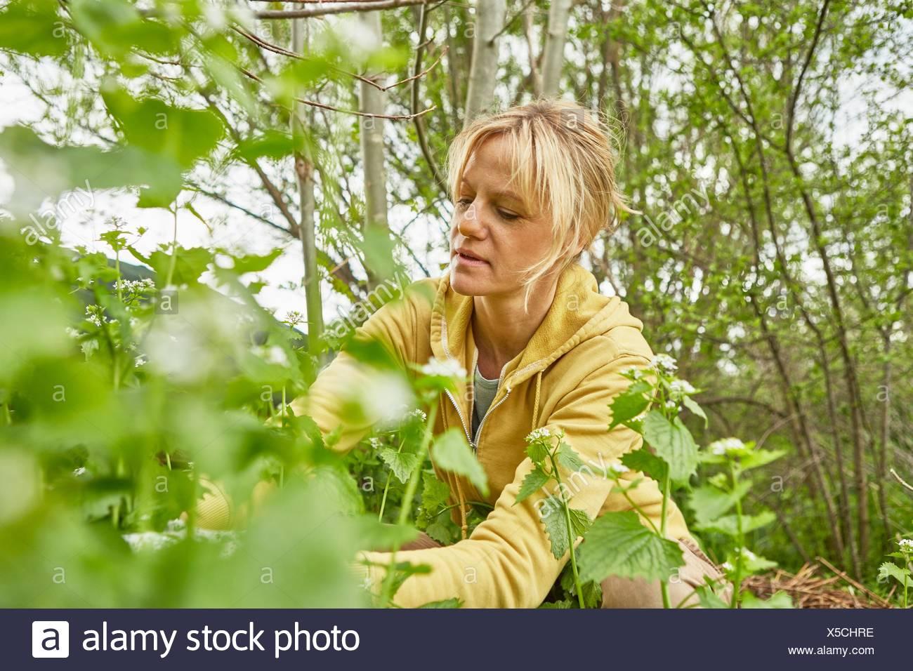 Reife Frau, Gartenarbeit, Unkraut hochziehen Stockfoto