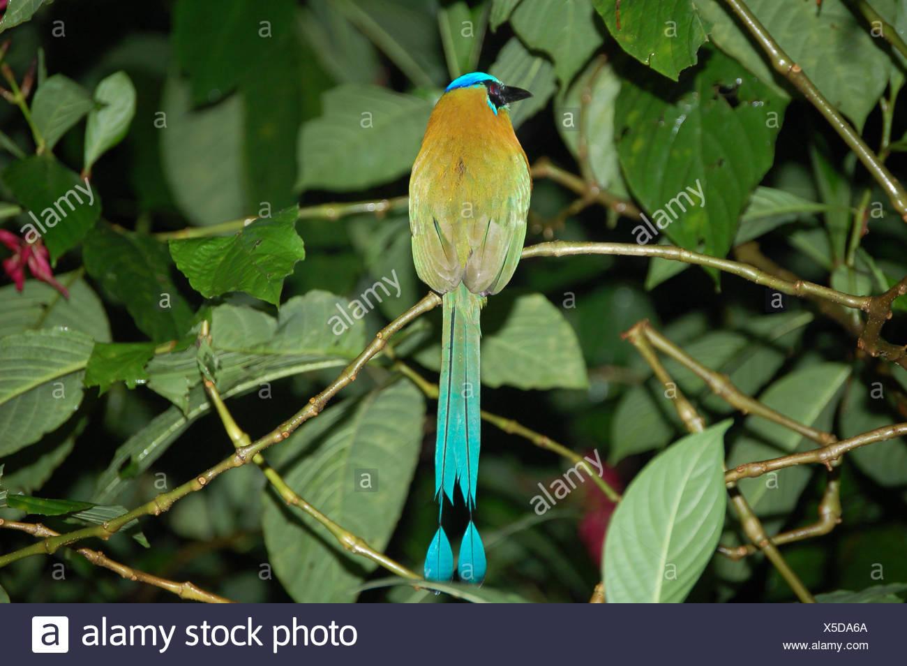 Blue Bird Coloured Colourful Gorgeous Stockfotos & Blue Bird ...
