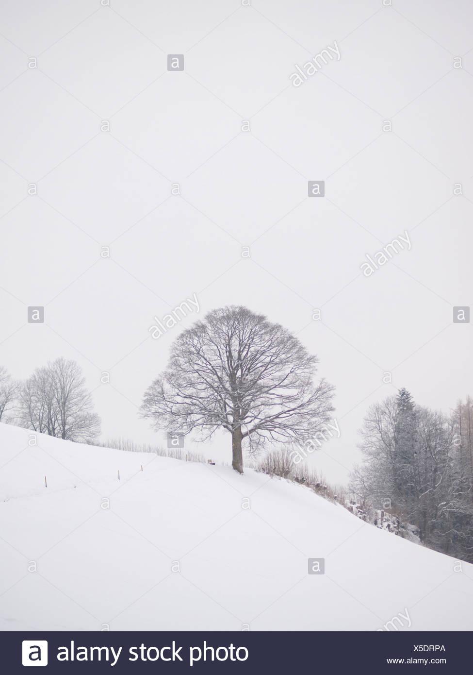 Appenzell, Ausserrhoden, Baum, Bäume, Strauch, Busch, Sträucher, Büsche, Nebel, hochrangige Nebel, Rehetobel, Schnee, Schweiz, Winter, Stockbild