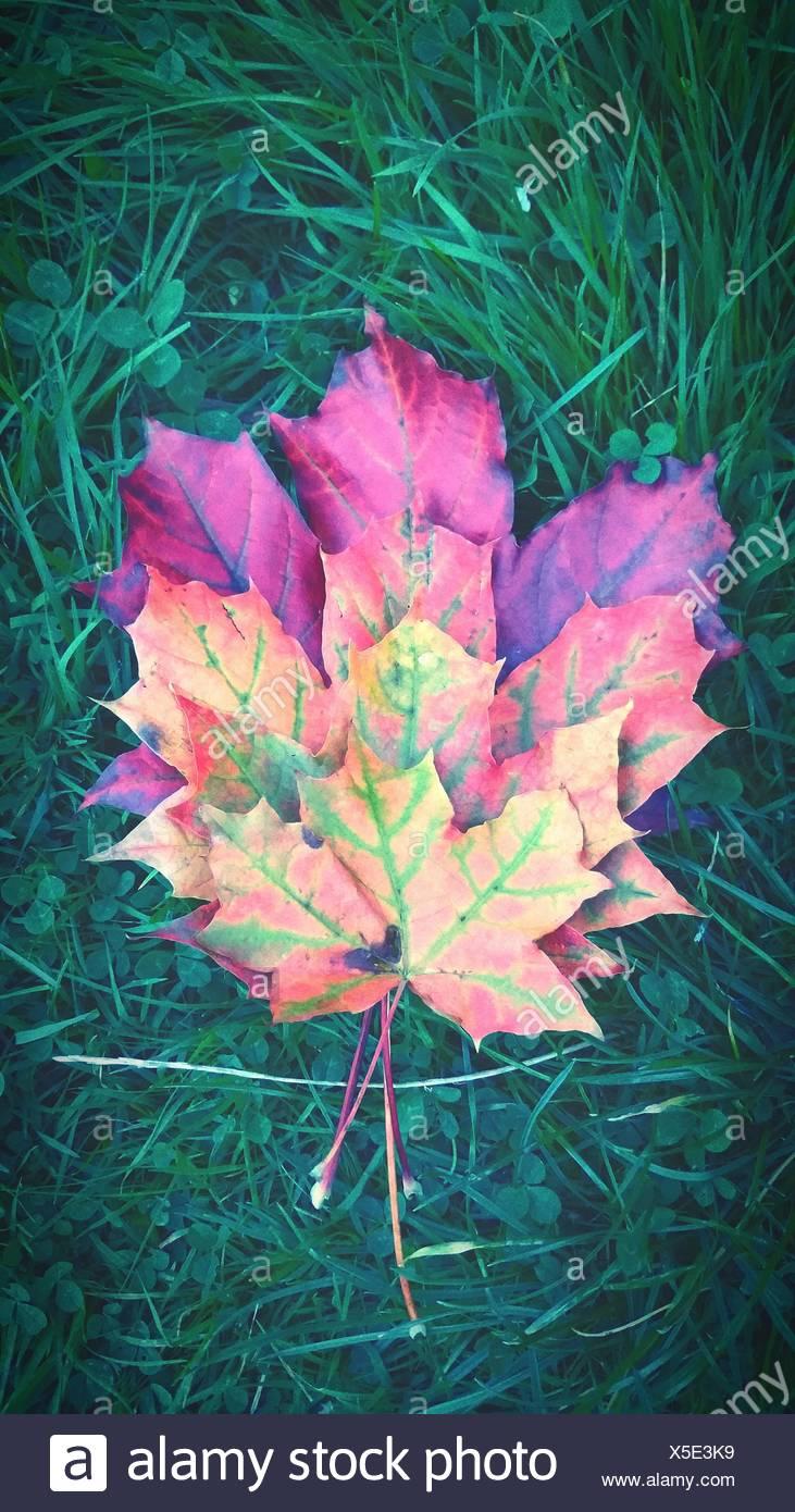 Blätter auf Wiese Stockbild