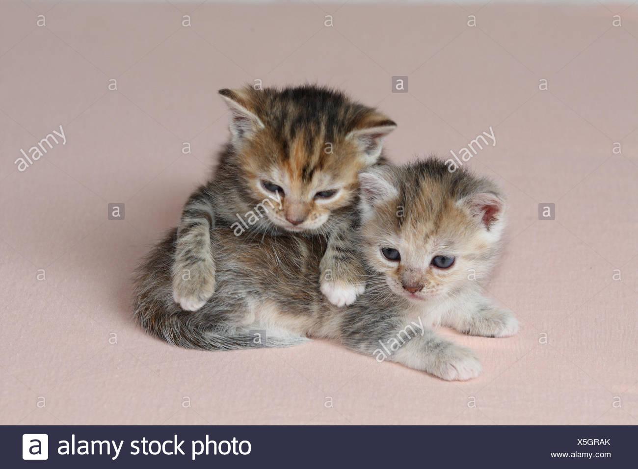 katzen junge liegen gemeinsam m de bett s ugetiere haustiere tiere kleine katzen. Black Bedroom Furniture Sets. Home Design Ideas