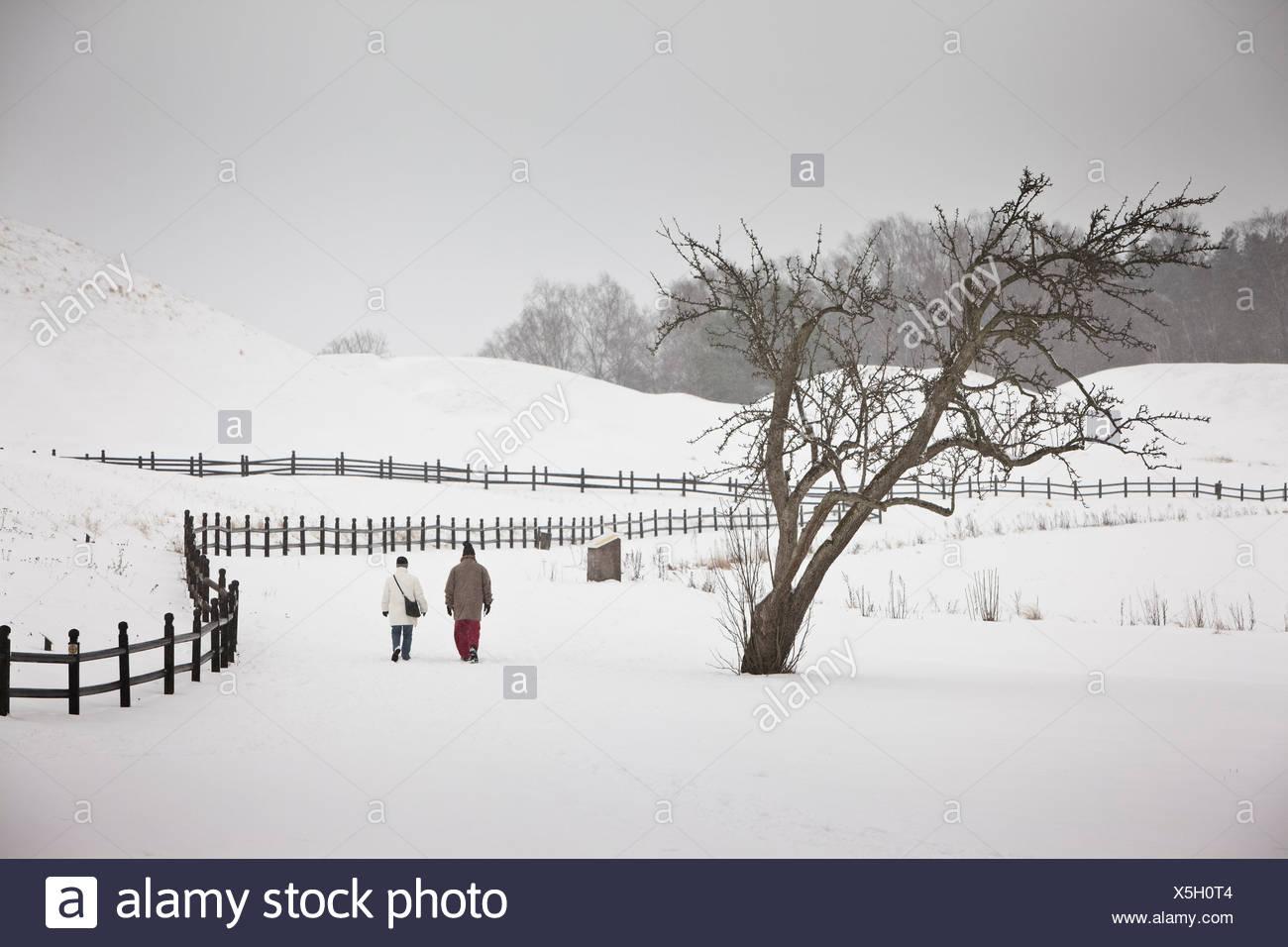 Sweden Snow Fence Tree Stockfotos & Sweden Snow Fence Tree Bilder ...