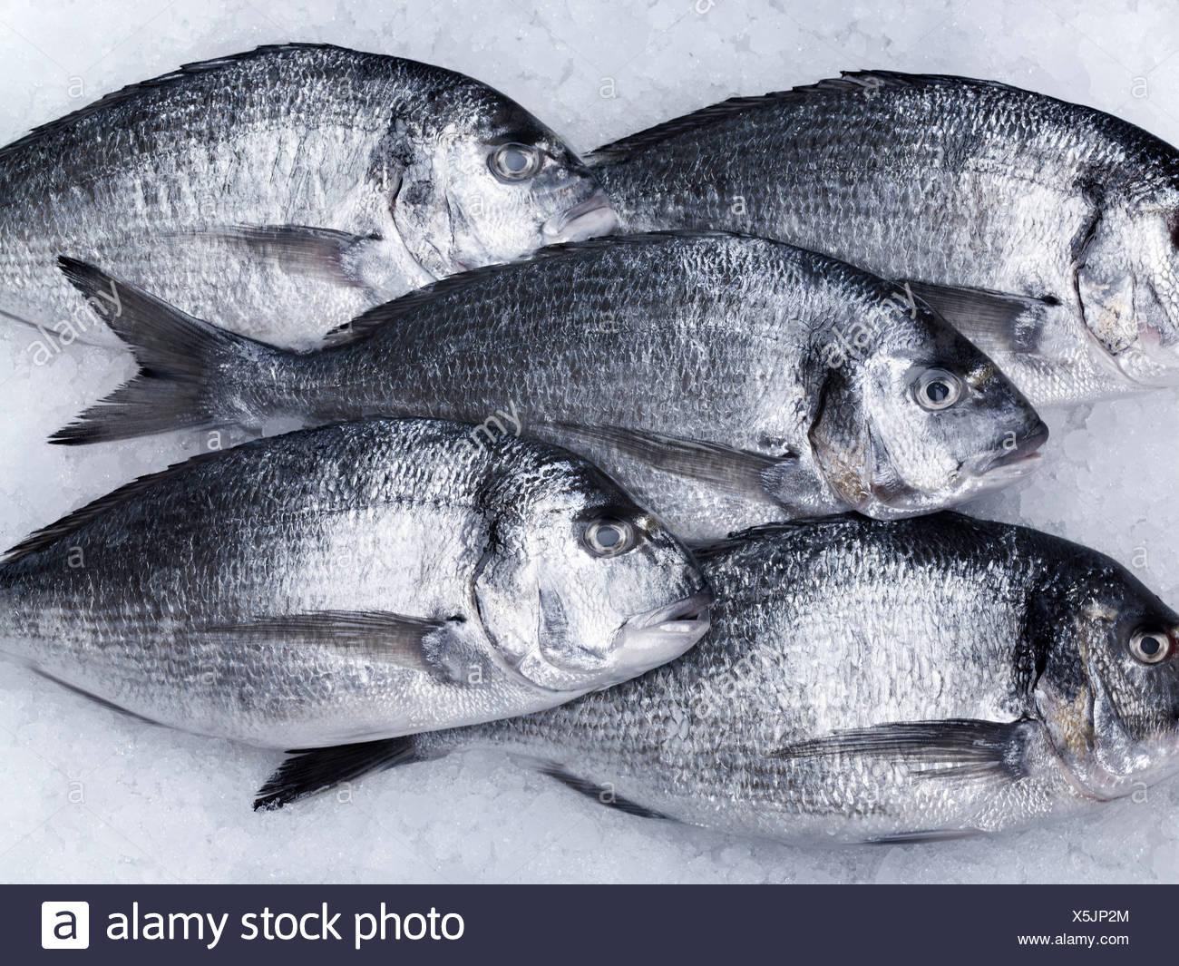 Tiere, Nahaufnahme, Farbbild, Kühlung, tot Fisch, Fisch, Fisch auf Eis, fünf Tiere, fünf Objekte, Bildung, frisches, gesundes Essen, qualitativ Stockbild