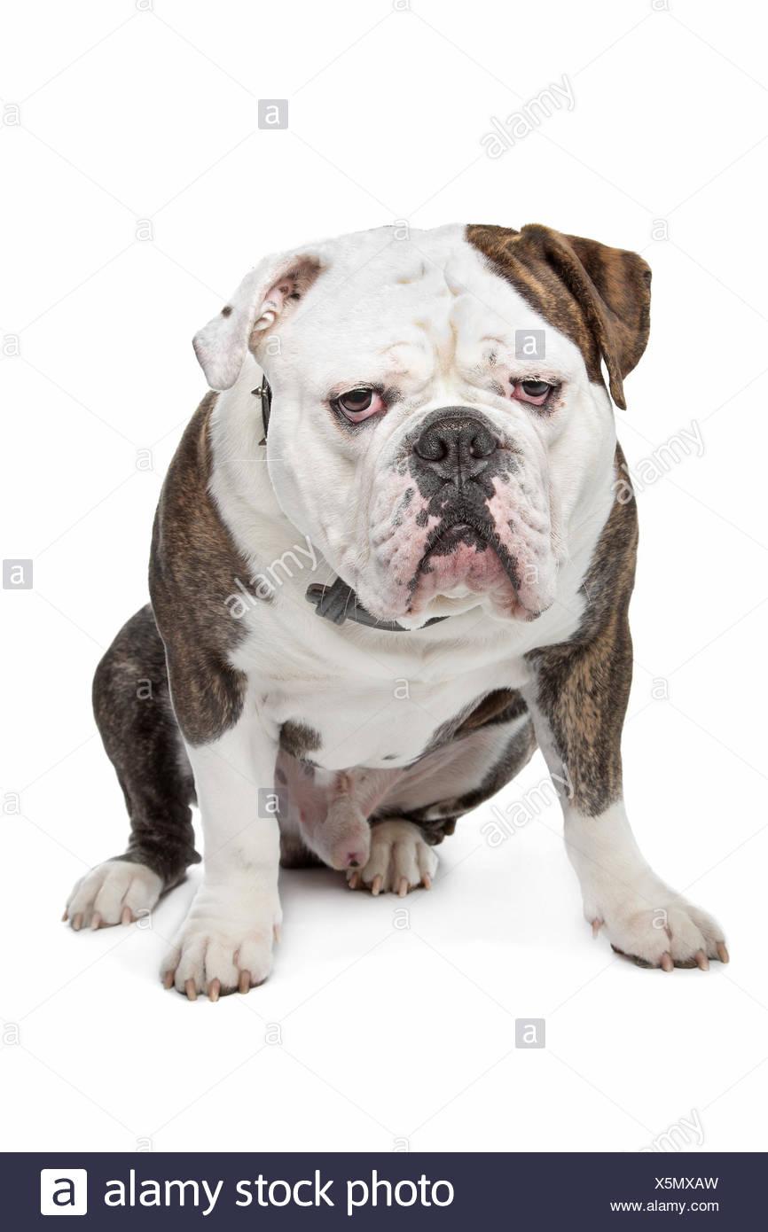 Fein Bulldog Färbung Seiten Galerie - Malvorlagen-Ideen ...