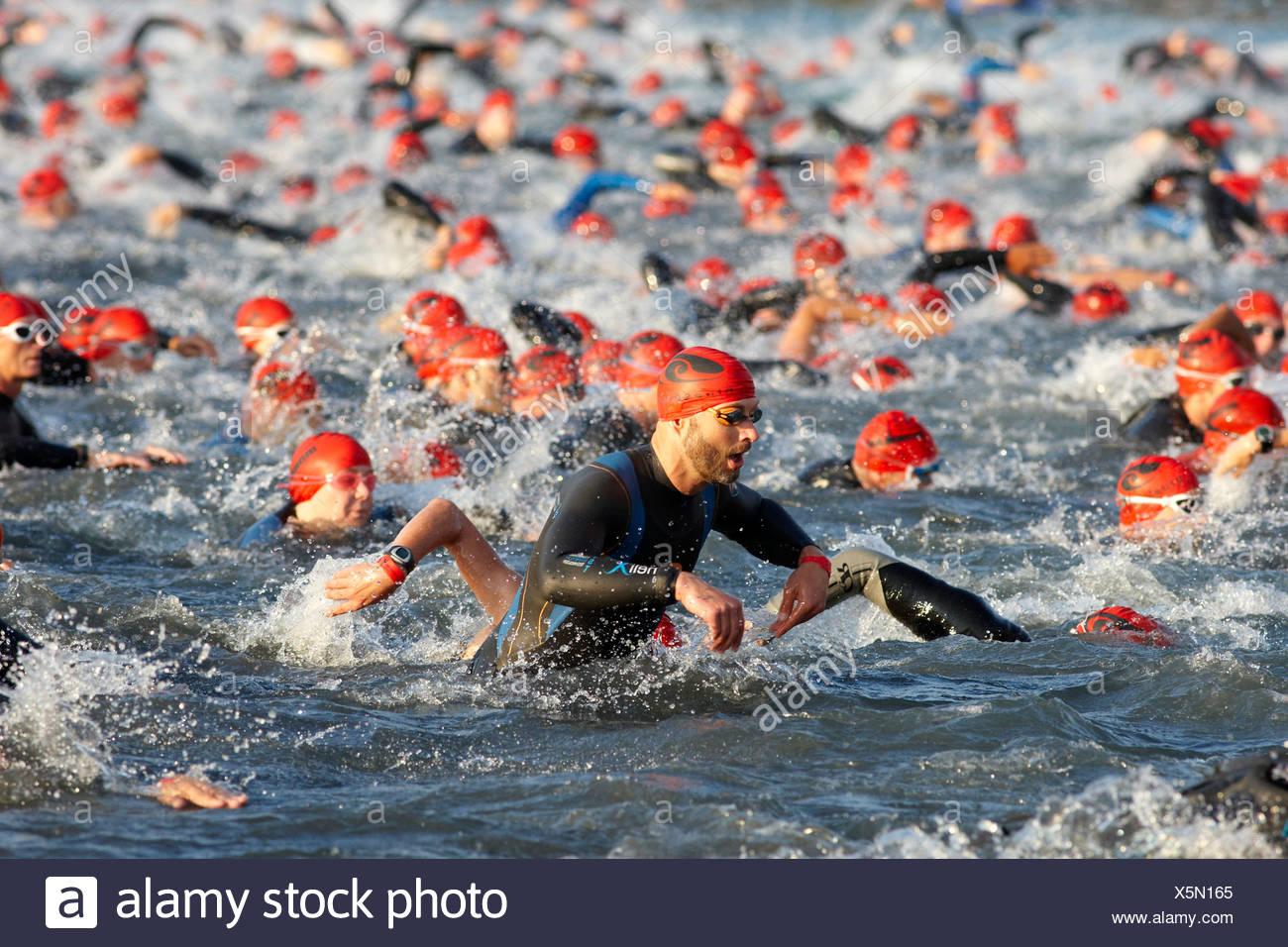 Triathlon, Schwimmen Wettbewerb, Ironman Germany, Frankfurt, Hessen, Deutschland, Europa Stockbild