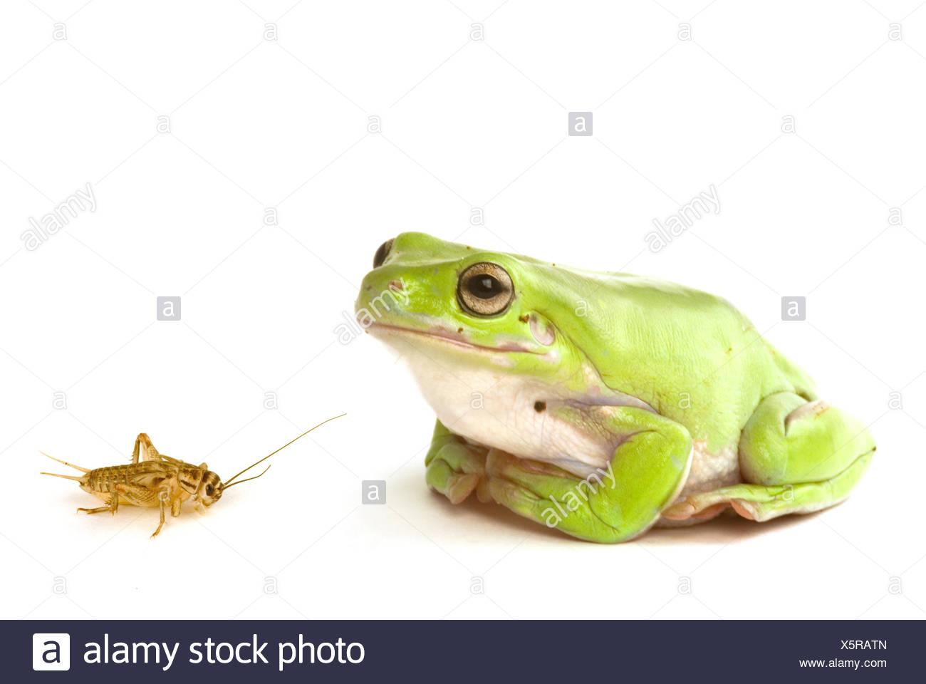 Ziemlich Frosch Färbung Bilder Galerie - Druckbare Malvorlagen ...