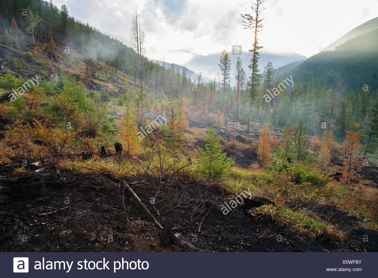 Verbrannte Hügel durch Wald Feuer-Schaden Stockbild