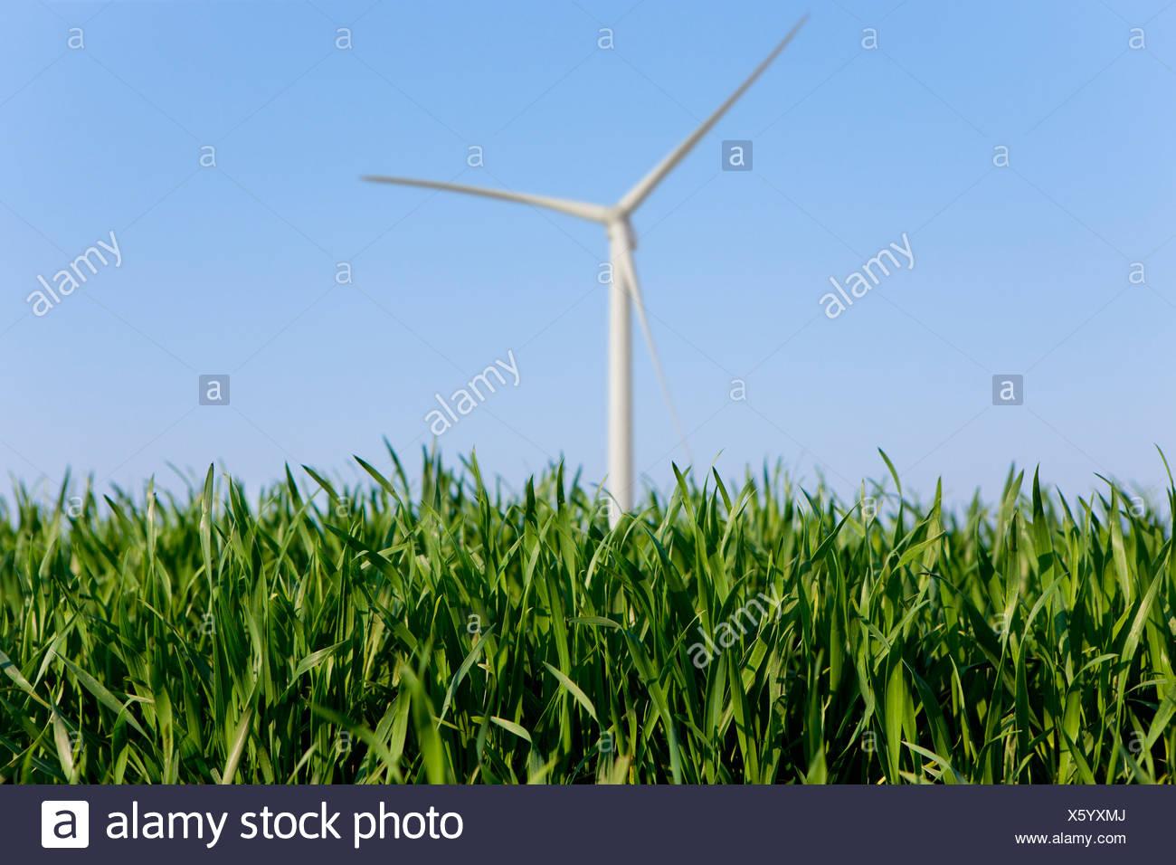 Nahaufnahme des Grases mit Windrad im Hintergrund Stockbild