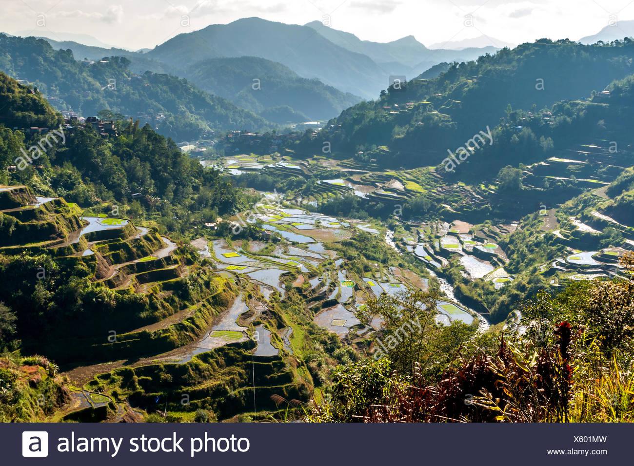 Sterben Sie die Berühmten Reisterrassen von Banaue, Luzon, Philippinen Stockbild
