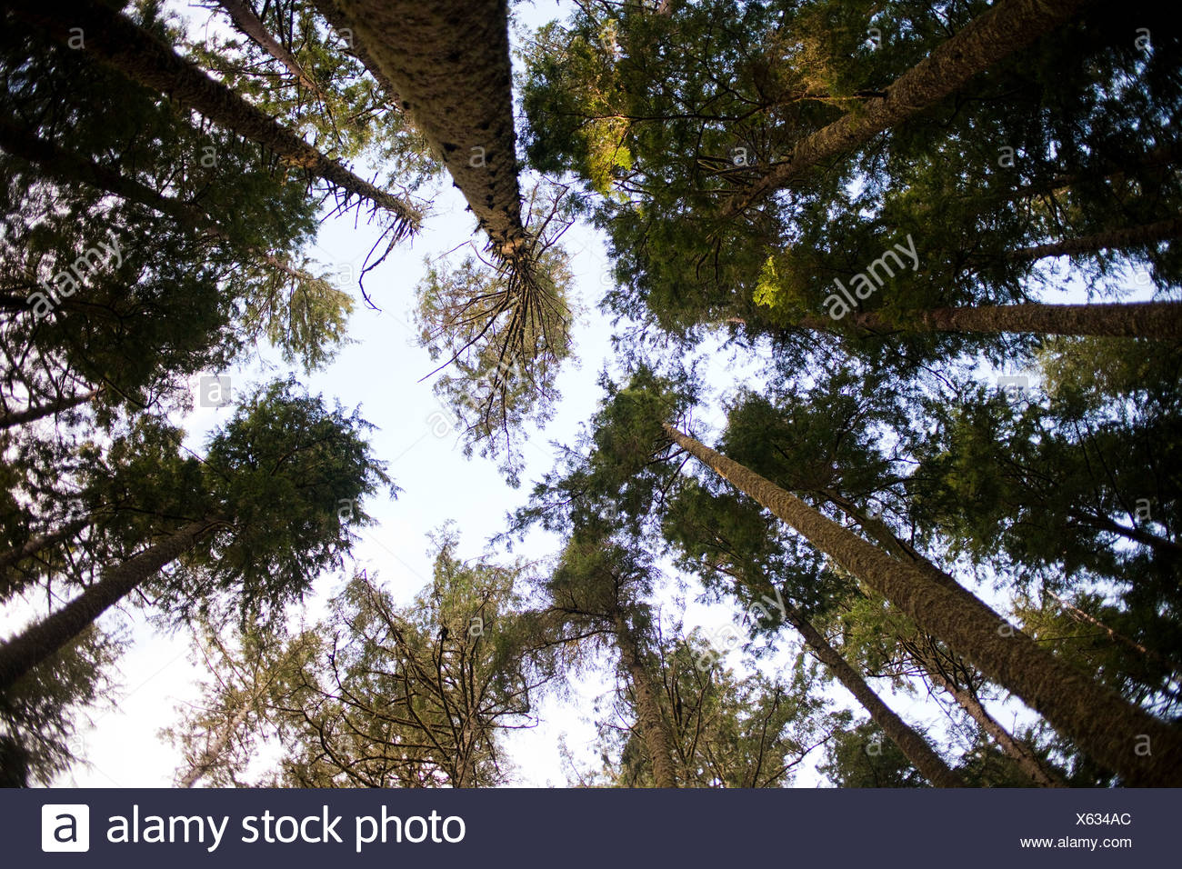 Bäume, niedrigen Winkel Ansicht Stockbild