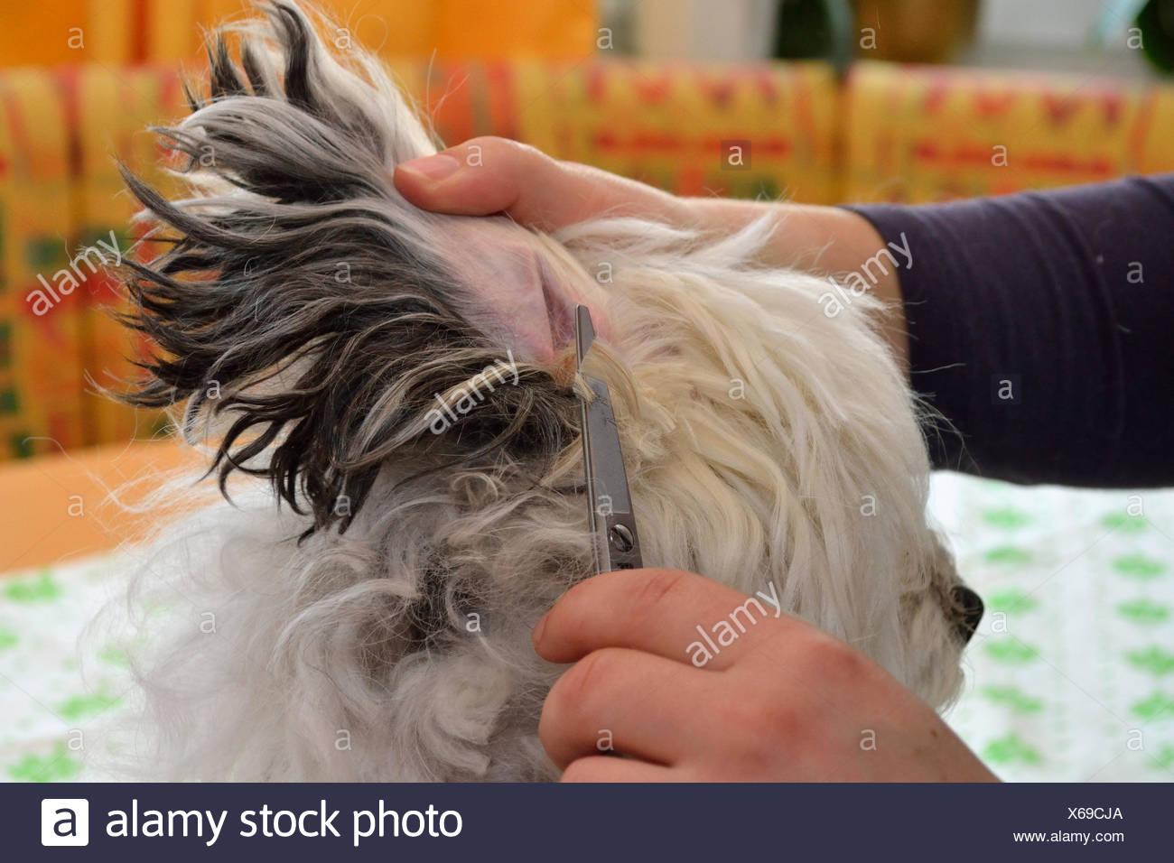 hund scheren