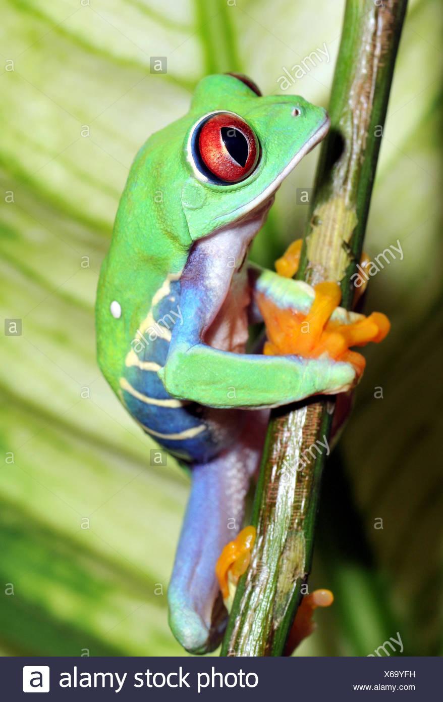 Beste Frosch Färbung Blatt Galerie - Beispiel Business Lebenslauf ...