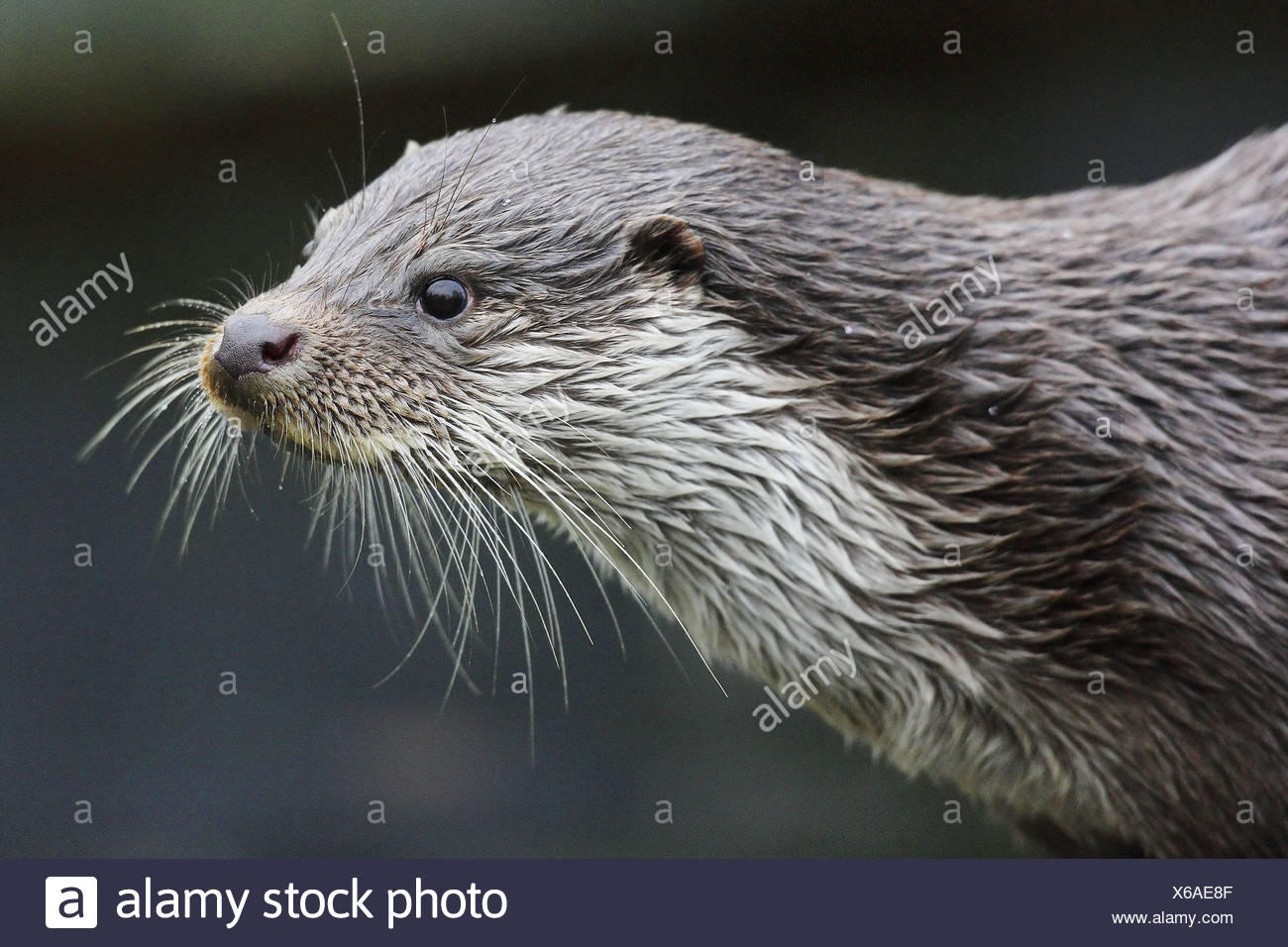 Wunderbar Baby Otter Malvorlagen Fotos - Malvorlagen Von Tieren ...
