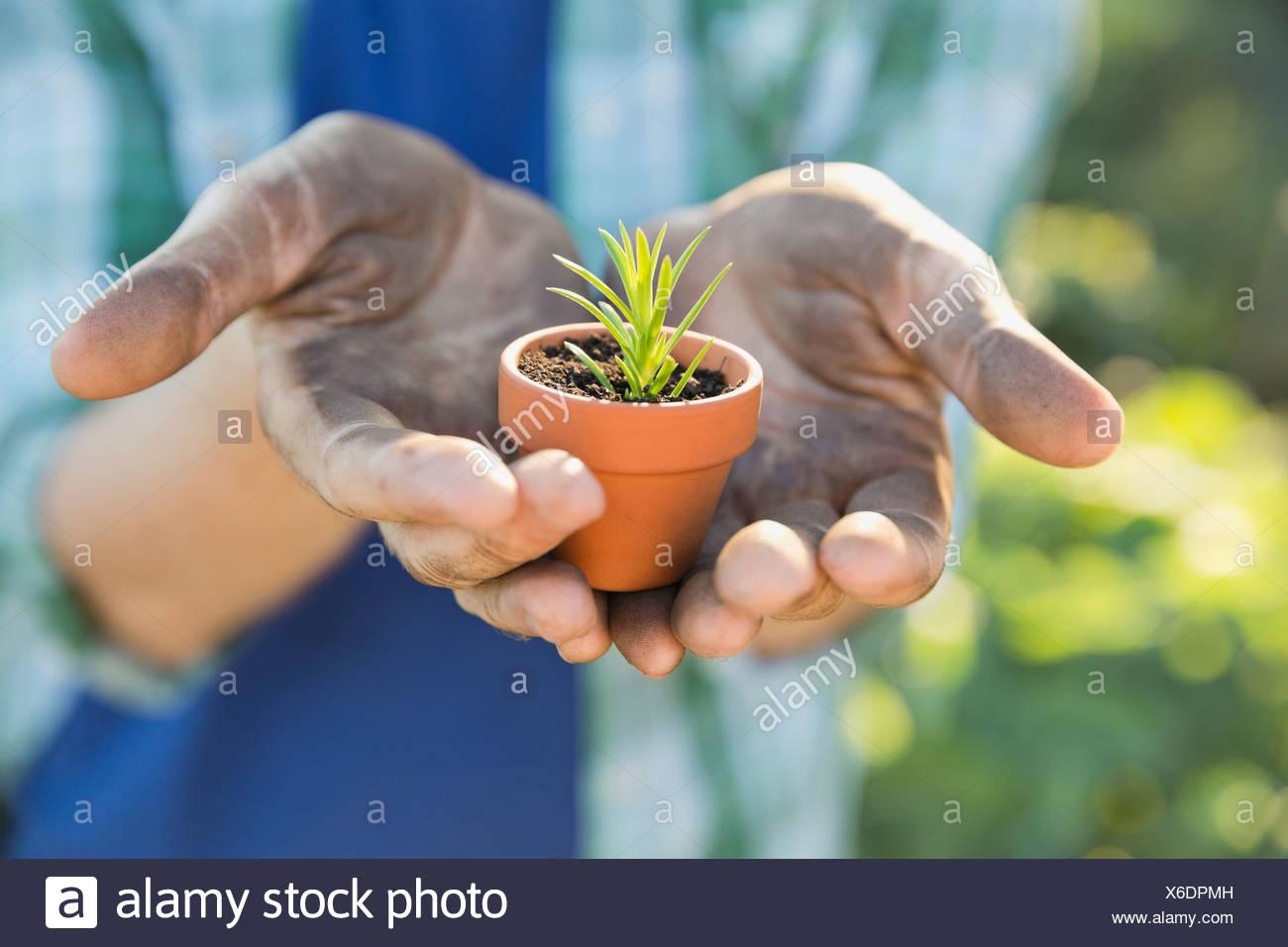 Mann hält kleine Topfpflanze Stockbild
