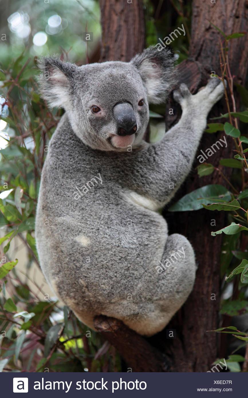 Nett Süße Koala Malvorlagen Ideen - Malvorlagen-Ideen ...