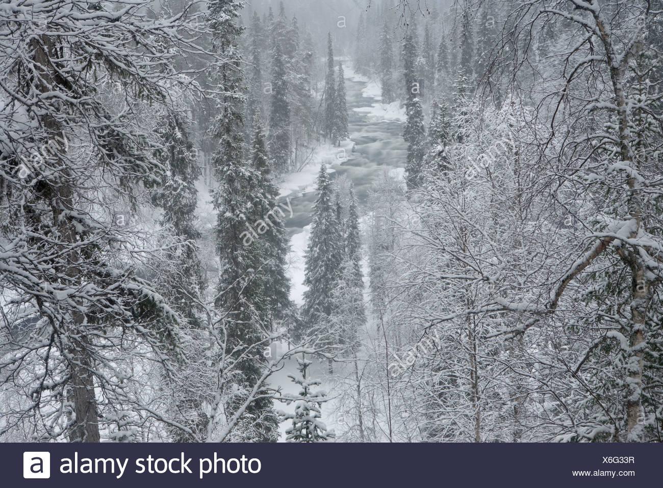 Die Kitka Fluss in Oulanka-Nationalpark, Finnland. Stockbild