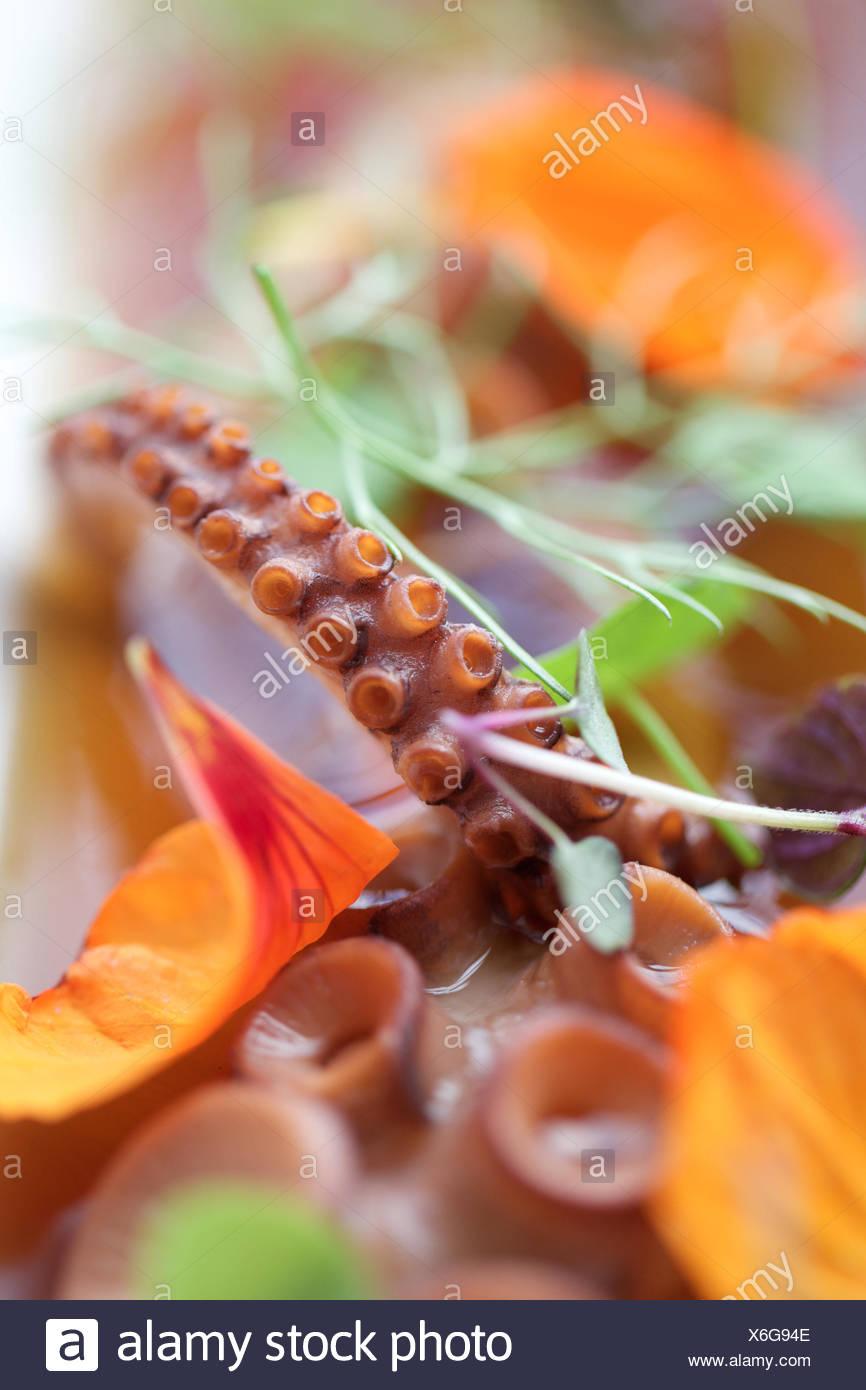 frisches rohes Tintenfisch Tentakel. Sucker, Fisch, Rohkost. Stockbild