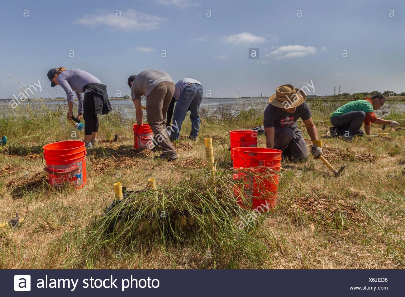 Fünf Personen an der Bereinigung Veranstaltung arbeiten, mlk Shoreline, Oakland, Kalifornien, USA Stockbild
