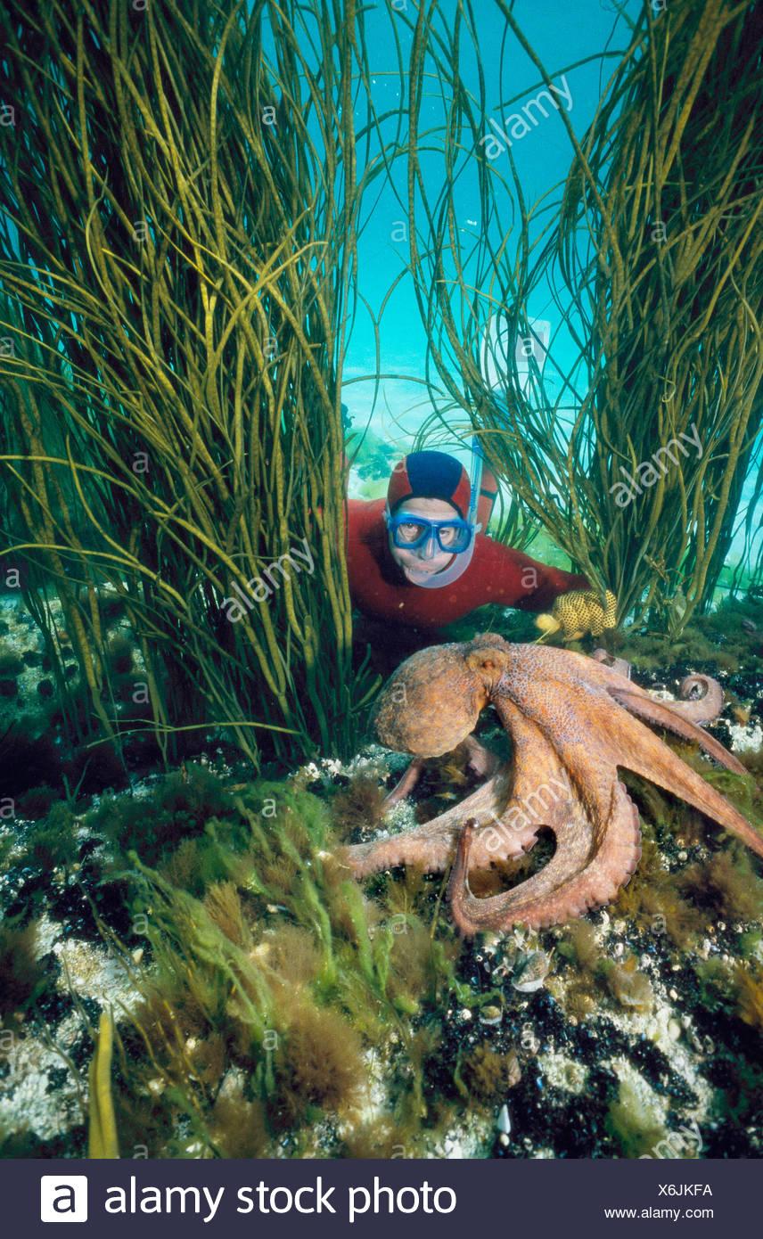 Ausgezeichnet Oktopus Färbung Seite Galerie - Malvorlagen Von Tieren ...