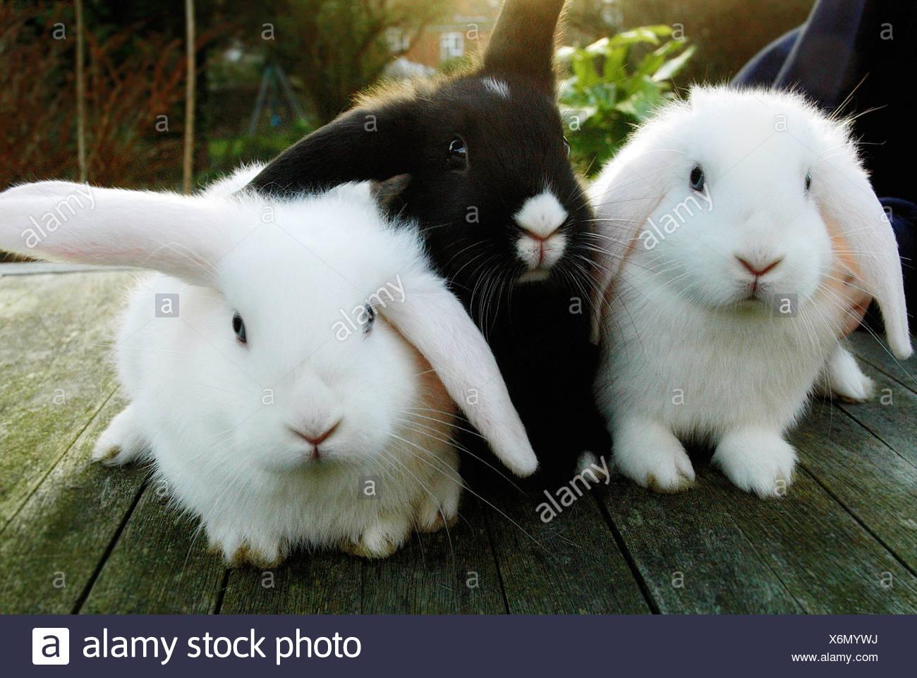 Kaninchen sitzend auf Holzterrasse Stockbild