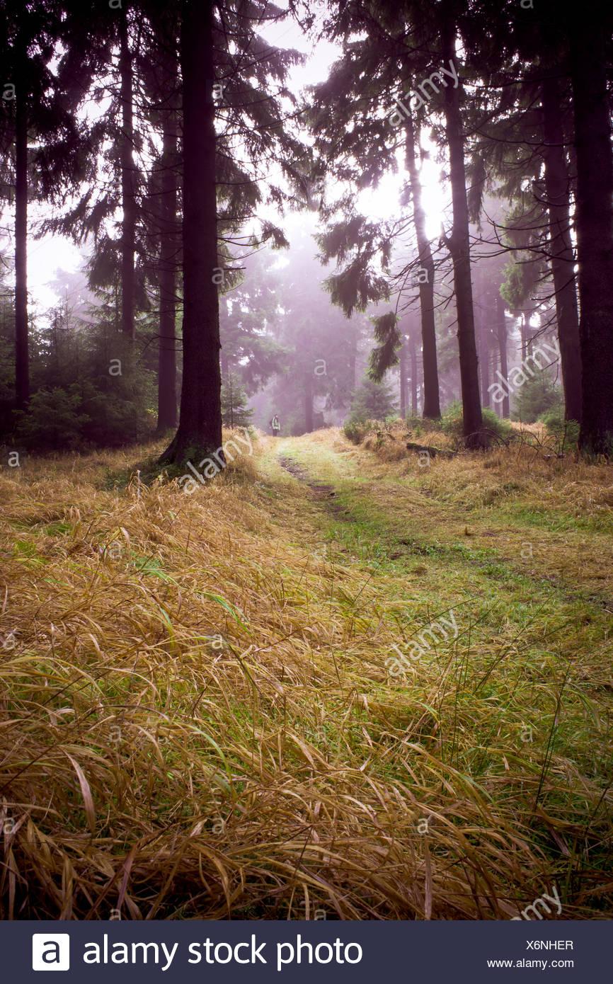 nebligen Wald Stockbild