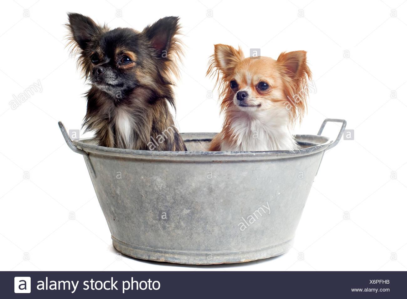 Hund Hunde Welpen Badewanne Badewanne Badewanne Zwei Schöne