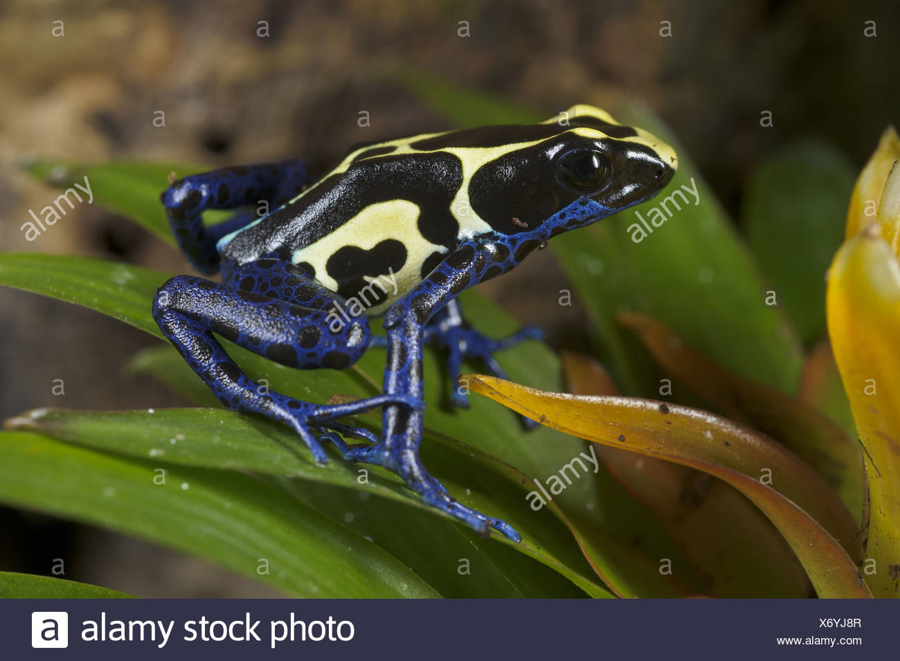 One Frog Stockfotos & One Frog Bilder - Seite 10 - Alamy