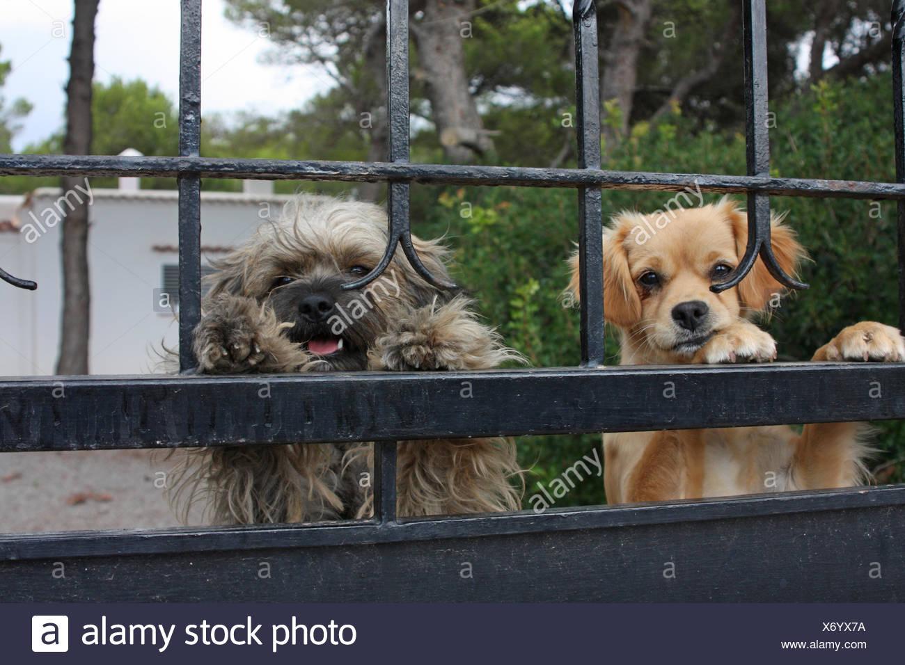 Hunde hinter einem Zaun Stockfoto, Bild: 279667118 - Alamy