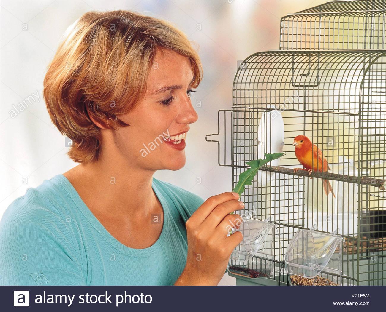 Kanarienvogel Im Käfig Stockbild
