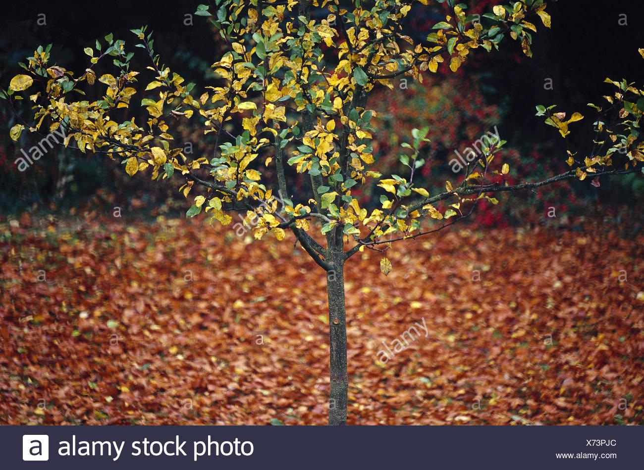 Nett Mein Stammbaum Färbung Seite Fotos - Entry Level Resume ...