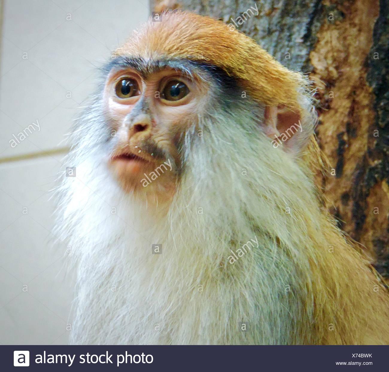 Nahaufnahme des Affen Stockfoto