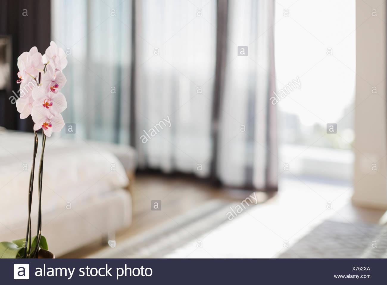 Weiß-rosa Orchideen im Schlafzimmer Stockfoto, Bild ...