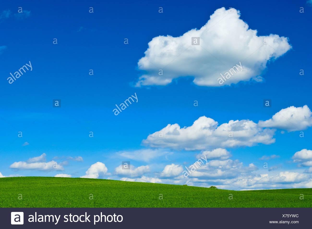 Cumulus-Wolken und grünen Feldern, Winterbourne, Ontario, Kanada Stockbild