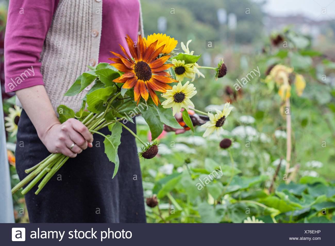 Blick auf Frau schneiden frische Blumen bei Zuteilung beschnitten Stockbild