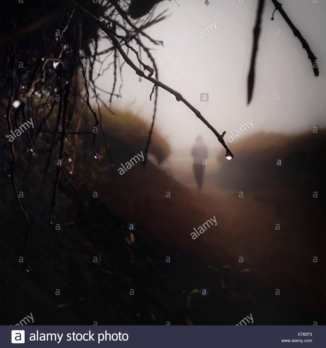 Nahaufnahme der nassen Zweigen Stockbild