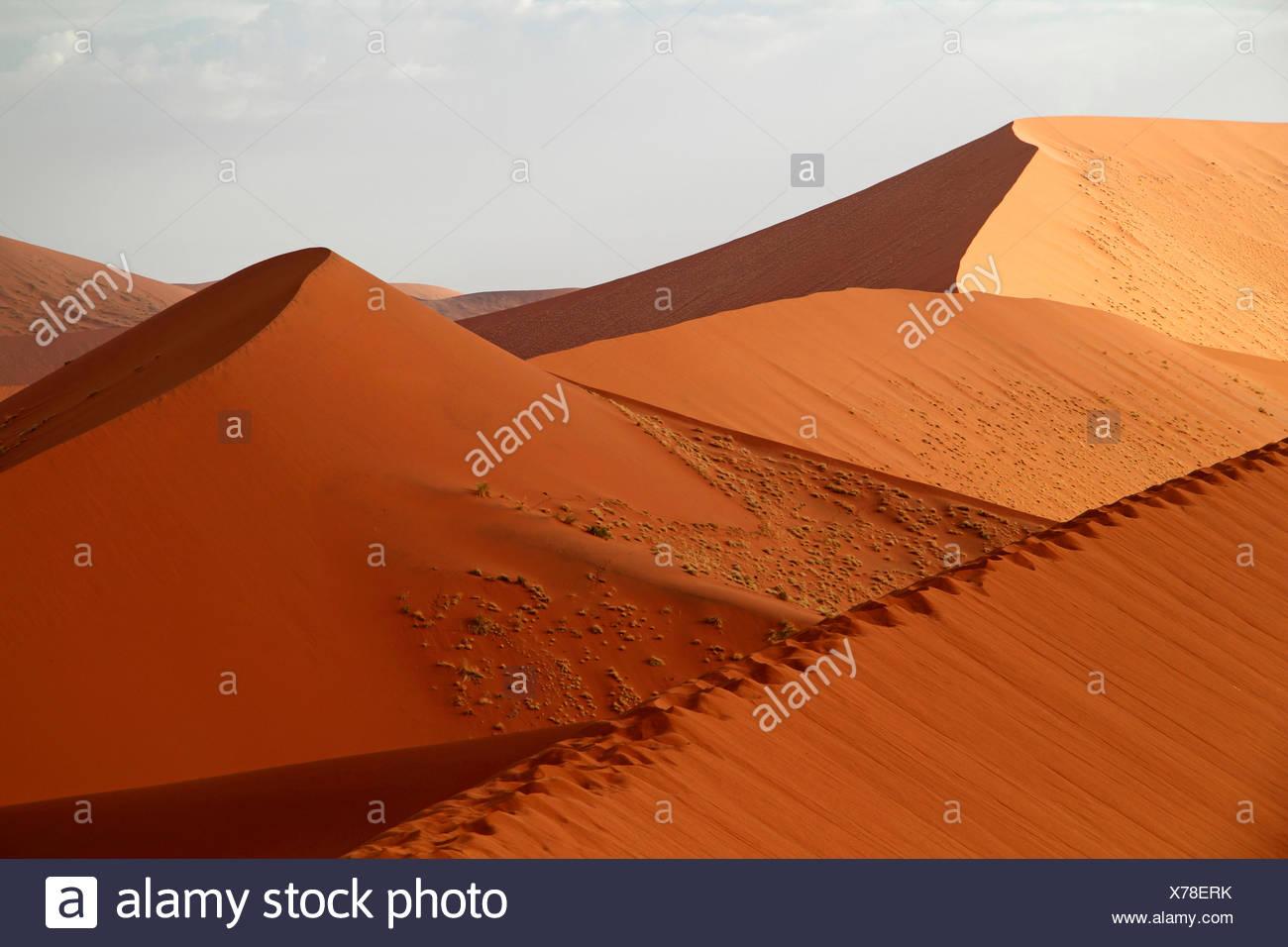 Sanddünen der Namib Wüste, Namibia, Namib-Naukluft-Nationalpark, Sossusvlei Stockbild