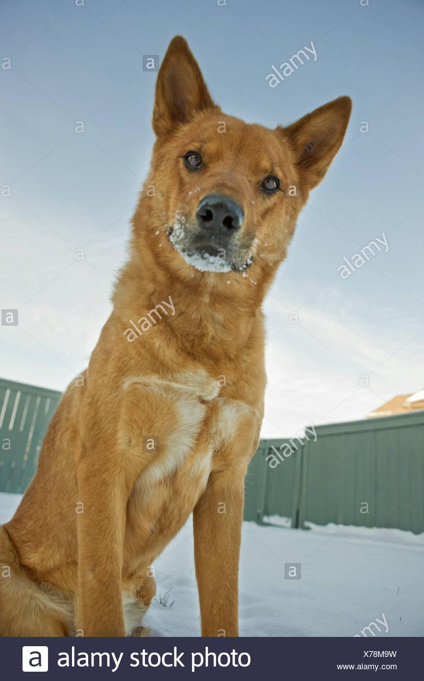 Porträt von Mischling Hund im Freien im winter Stockfoto