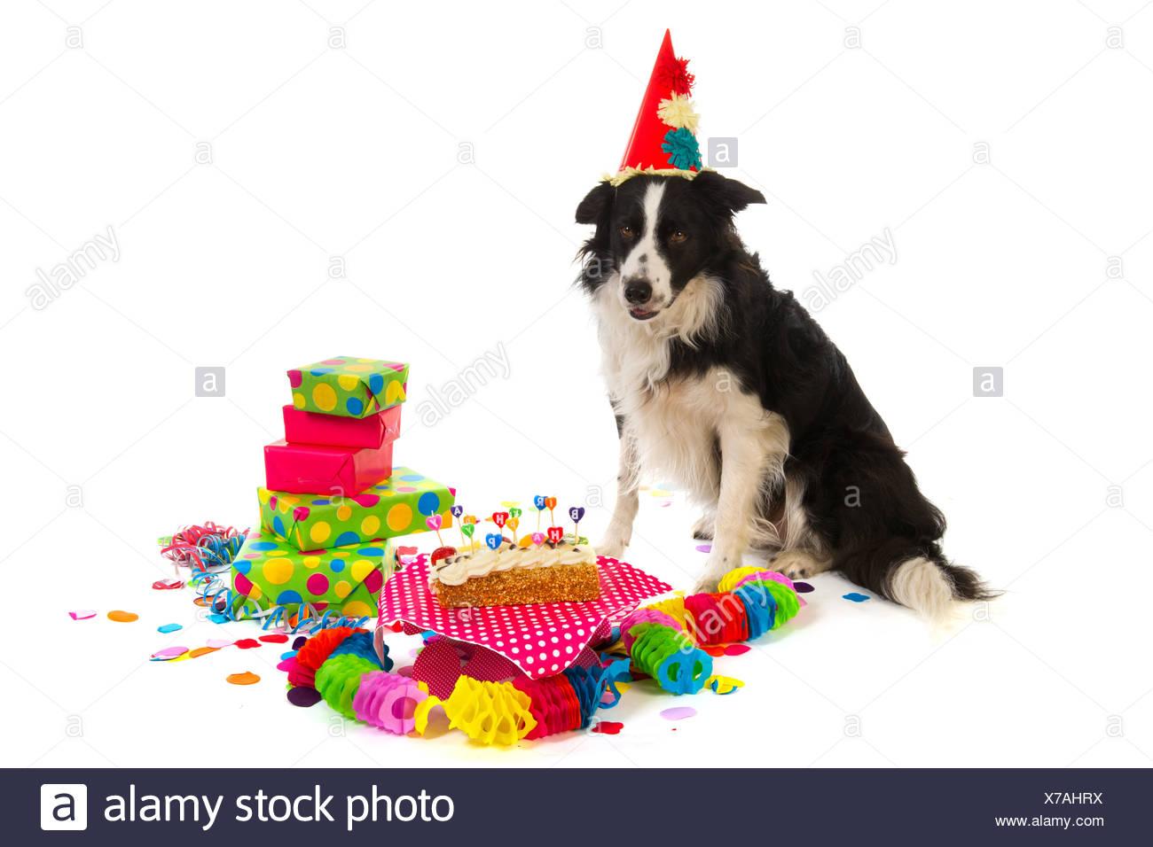 Geburtstag Hund Stockfoto Bild 279901998 Alamy