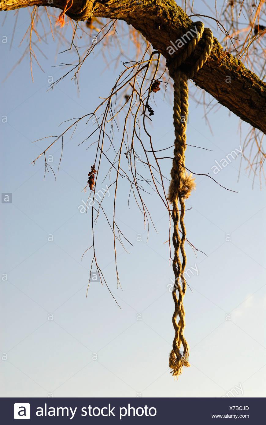 Gallows Tree Stockfotos & Gallows Tree Bilder - Alamy