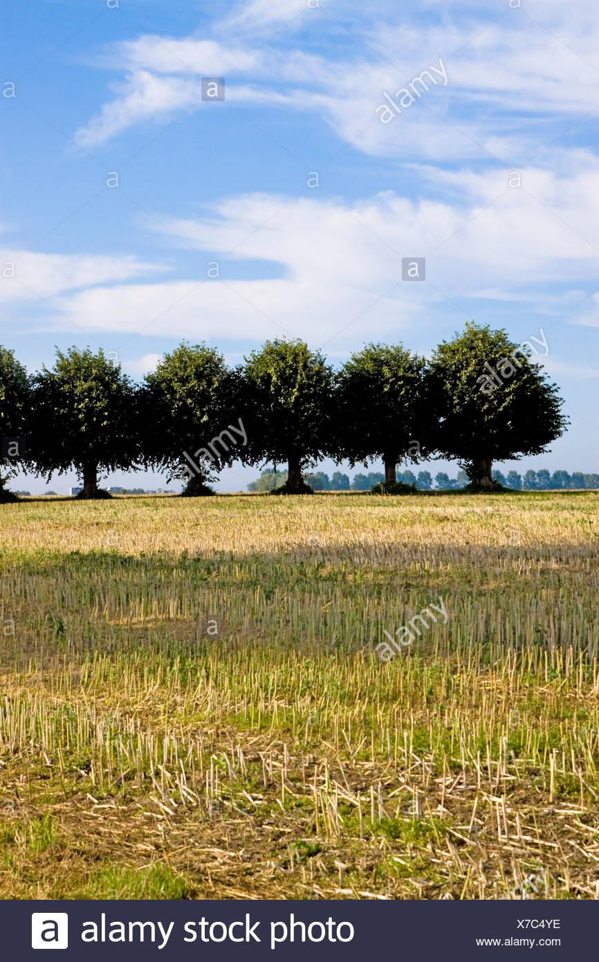 Deutschland, Wismar, Insel Poel, Baumreihe in Land Stockbild