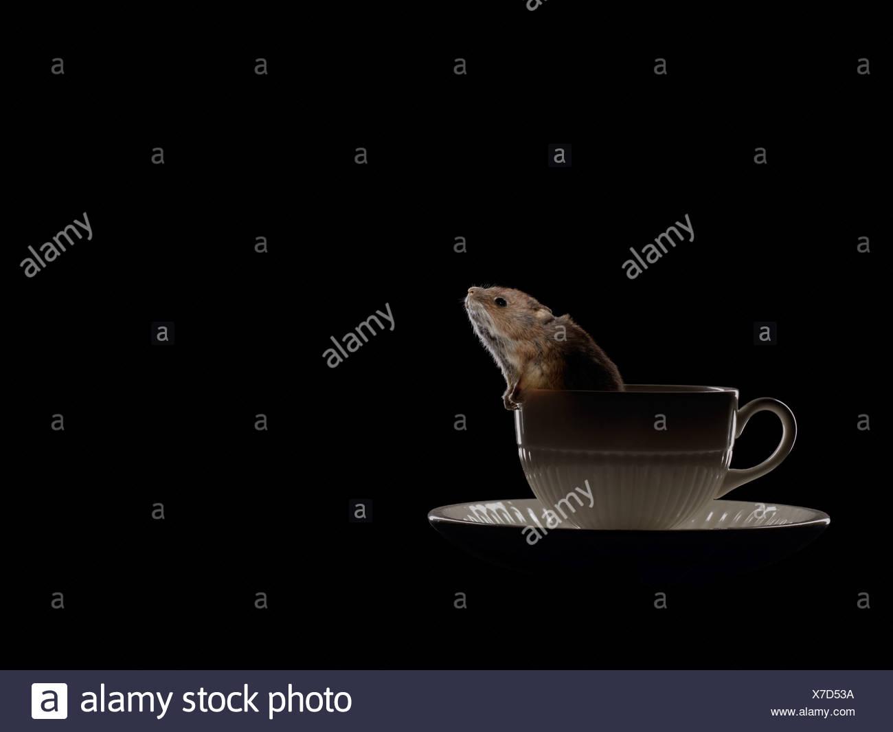 Maus im Wasserglas Stockbild
