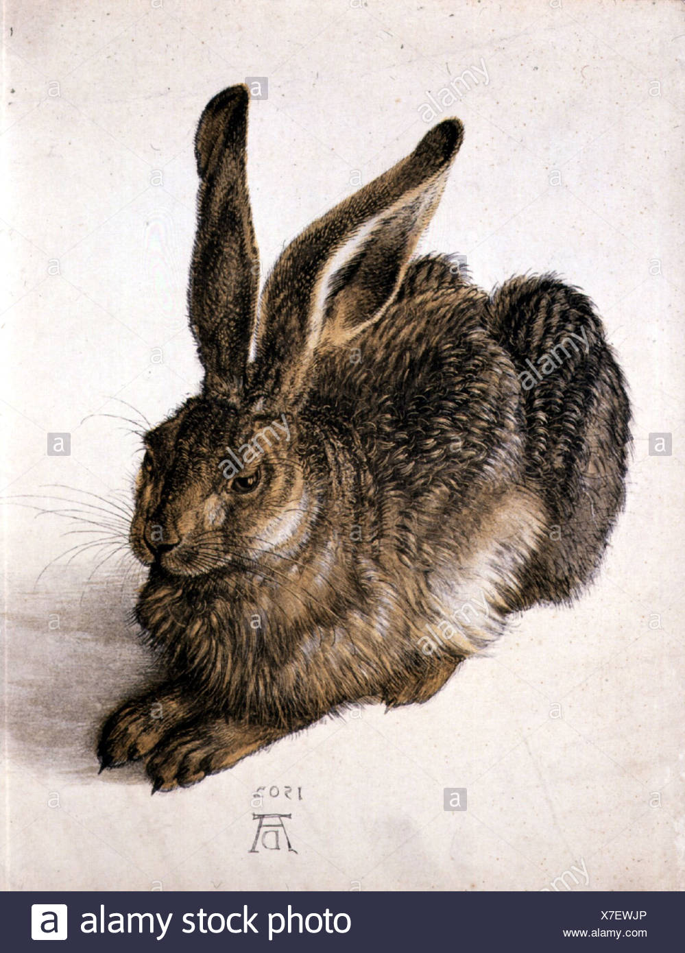 "Bildende Kunst, Dürer, Albrecht (1471-1528), ""Feldhase"" (Young Hare), Aquarell, 1502, Albertina, Wien, Österreich, Zoologie, Hase Stockbild"