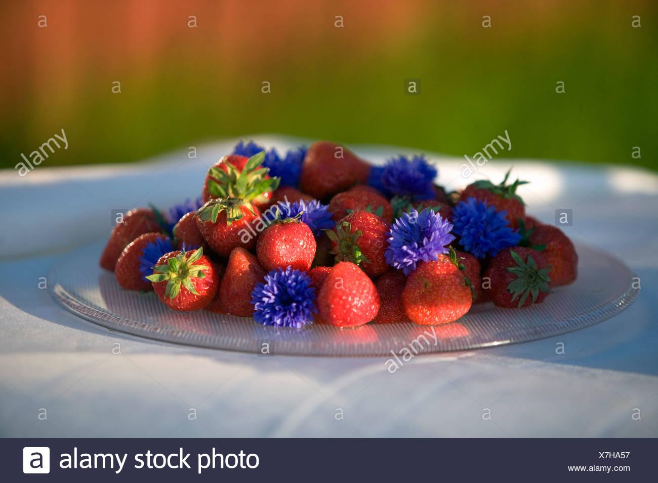 Erdbeeren, Fejan, Stockholmer Schären, Schweden. Stockfoto